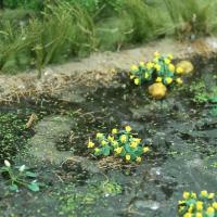 Railway Scenery 00376 - Marsh Marigold